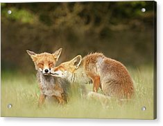 Foxy Love Series - Kiss Acrylic Print