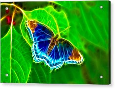 Fractal Butterfly Acrylic Print by Rich Leighton