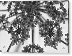 Fractal Flower Photoset 02 Acrylic Print by Ryan Kelly
