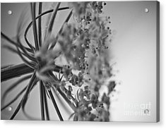 Fractal Flower Photoset 03 Acrylic Print by Ryan Kelly