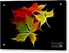 Fractal Leaves Acrylic Print