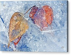 Fractured Seasons Acrylic Print by Mike  Dawson