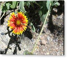Fragile Floral Life On The Trail Acrylic Print