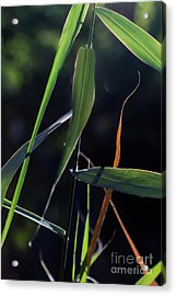 Acrylic Print featuring the photograph Fragment by Linda Lees