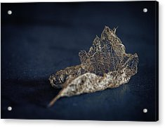 Acrylic Print featuring the photograph Fragment by Tim Nichols