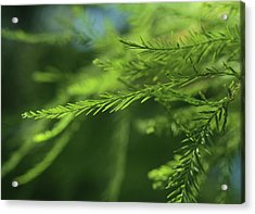 Acrylic Print featuring the photograph Fragments Of Time  by Connie Handscomb