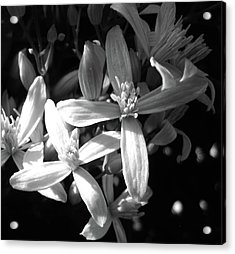Fragrance Acrylic Print by Mary Ellen Frazee