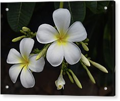 Acrylic Print featuring the photograph Fragrance Of Hawaii by Pamela Walton