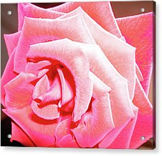 Acrylic Print featuring the photograph Fragrant Rose by Marie Hicks