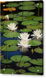 Fragrant Water Lily Acrylic Print by Christine Savino