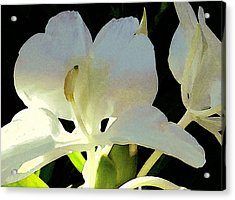 Fragrant White Ginger Acrylic Print by James Temple