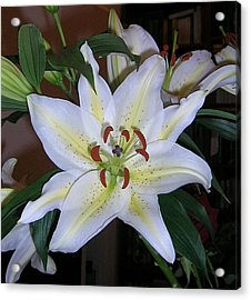 Fragrant White Lily Acrylic Print by Valerie Ornstein