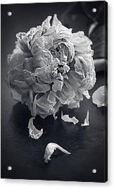 Frail Goodbye Acrylic Print