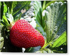 Acrylic Print featuring the photograph Fraise by Alison Frank