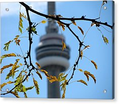 Framed By Nature Acrylic Print by Alfred Ng