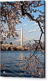 Framed With Blossoms Acrylic Print by Christopher Holmes