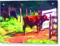 Franca Cattle 2 Acrylic Print by Caito Junqueira