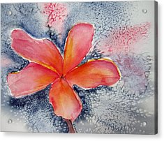 Frangipani Blue Acrylic Print by Elvira Ingram