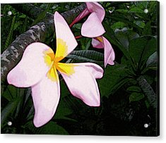 Acrylic Print featuring the digital art Frangipani Moment by Winsome Gunning