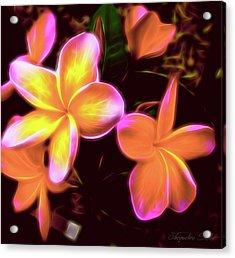 Frangipanis On The Glow Acrylic Print