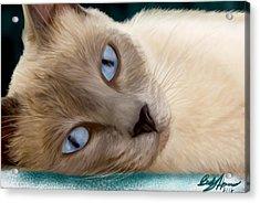 Frankie Blue Eyes Acrylic Print