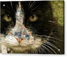 Frankie Acrylic Print by Paul Lovering