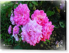 Frank's Roses Acrylic Print by MaryLee Parker