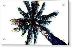 Frazzled Palm Tree Acrylic Print