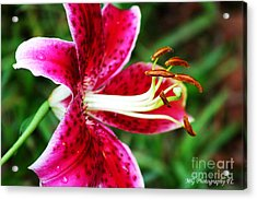 Freckled Flower  Acrylic Print