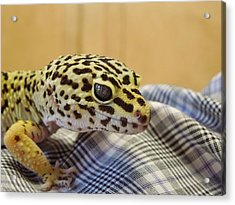 Freckles The Leopard Spotted Gecko Acrylic Print