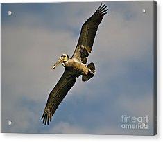 Free As A Bird Acrylic Print