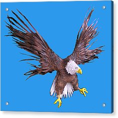 Free Bird Acrylic Print by Dan Townsend