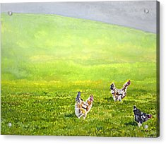 Free Range Chickens Acrylic Print by Francis Robson