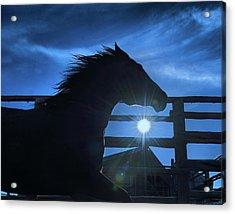Free Spirit Horse Acrylic Print