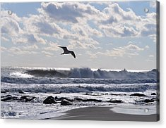 Free Spirit Acrylic Print by Joe  Burns