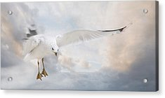Acrylic Print featuring the photograph Free To Fly by Robin-Lee Vieira