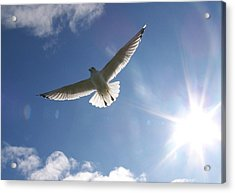 Freedom - Photograph Acrylic Print by Jackie Mueller-Jones