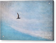 Freedom Acrylic Print by Angela Doelling AD DESIGN Photo and PhotoArt