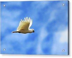 Freedom Acrylic Print by Animus Photography