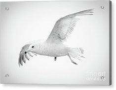Freedom Acrylic Print