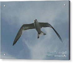Acrylic Print featuring the photograph Freedom by Donna Brown