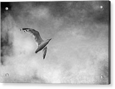 Freedom In Black And White Acrylic Print by Maggie Terlecki