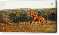 Freedom In The Late Afternoon Acrylic Print