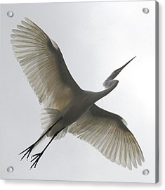 Freedom Of Flight Acrylic Print