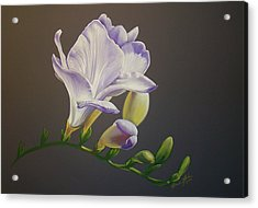 Freesia 1 Acrylic Print by Brandi York