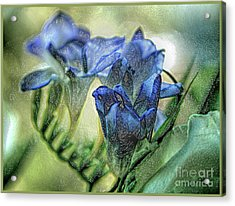 Acrylic Print featuring the photograph Freesia Carved In Blue by Lance Sheridan-Peel