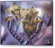 Acrylic Print featuring the photograph Freesia Carved One by Lance Sheridan-Peel
