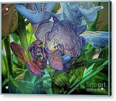 Acrylic Print featuring the photograph Freesia Multi Coloured by Lance Sheridan-Peel