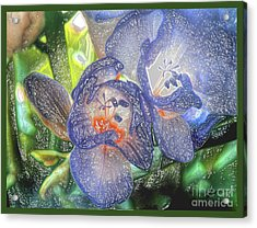 Acrylic Print featuring the photograph Freesia's In Bloom by Lance Sheridan-Peel