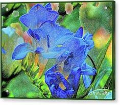 Freesia's Of Beauty Acrylic Print